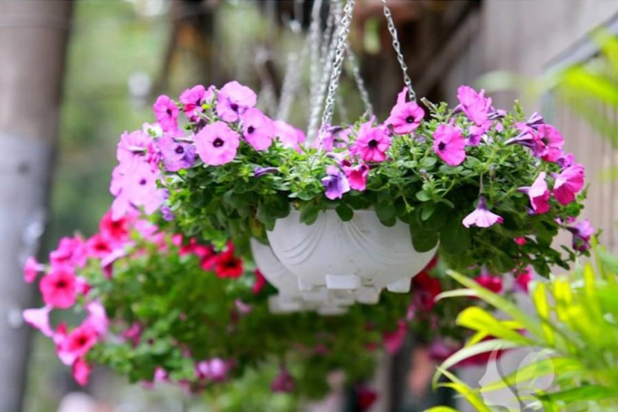 Hoa Trong Trong Nha